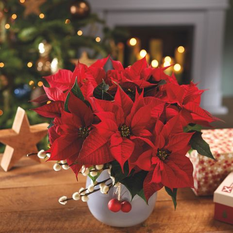 McKean Marketplace - Holiday Plants & Wreaths